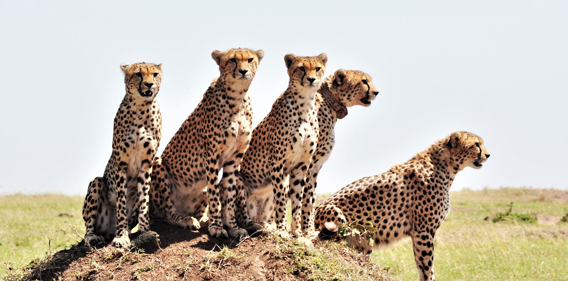 Masai Mara Tours Booking